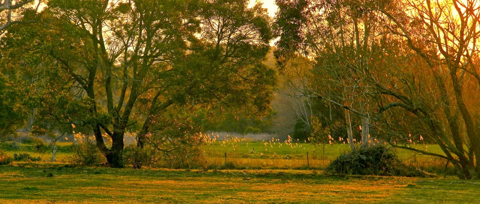 Meadow Sunset 1